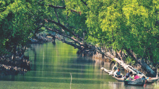 Why should You Care about the Sundarbans?